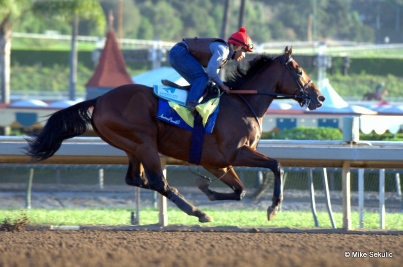 American Pharoah takes to the track