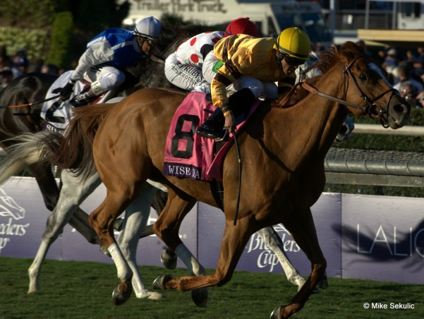 Wise Dan wins the Breeders Cup Mile 2013