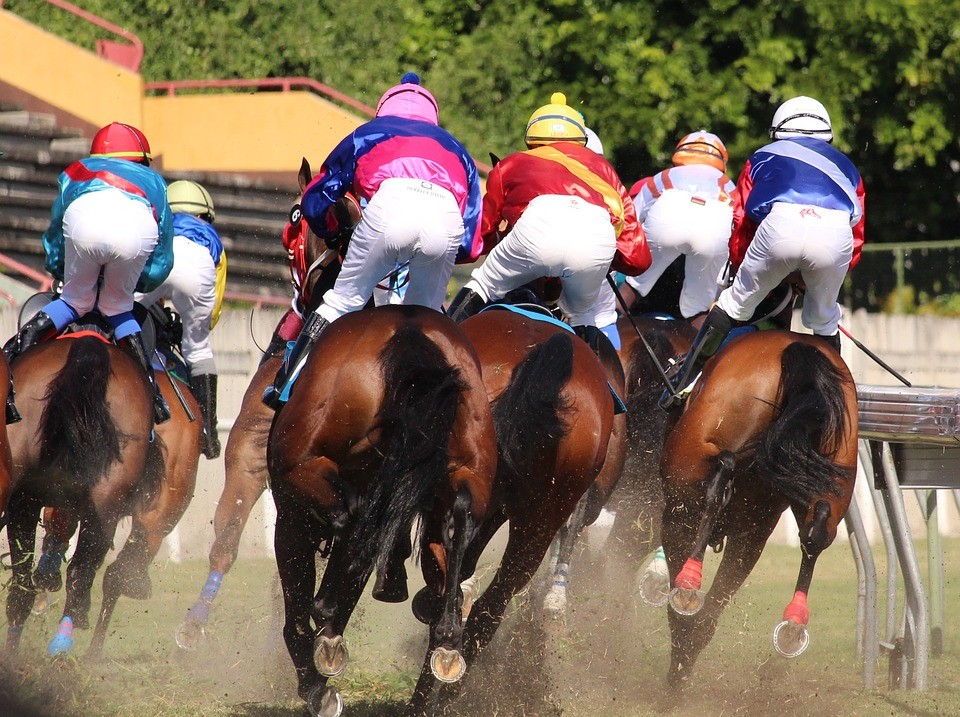 Melbourne Cup Runners