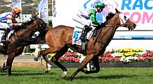Prince Of Penzance wins Melbourne Cup in 2015 for jockey Michelle Payne