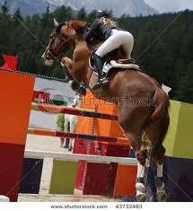 Show Jumper